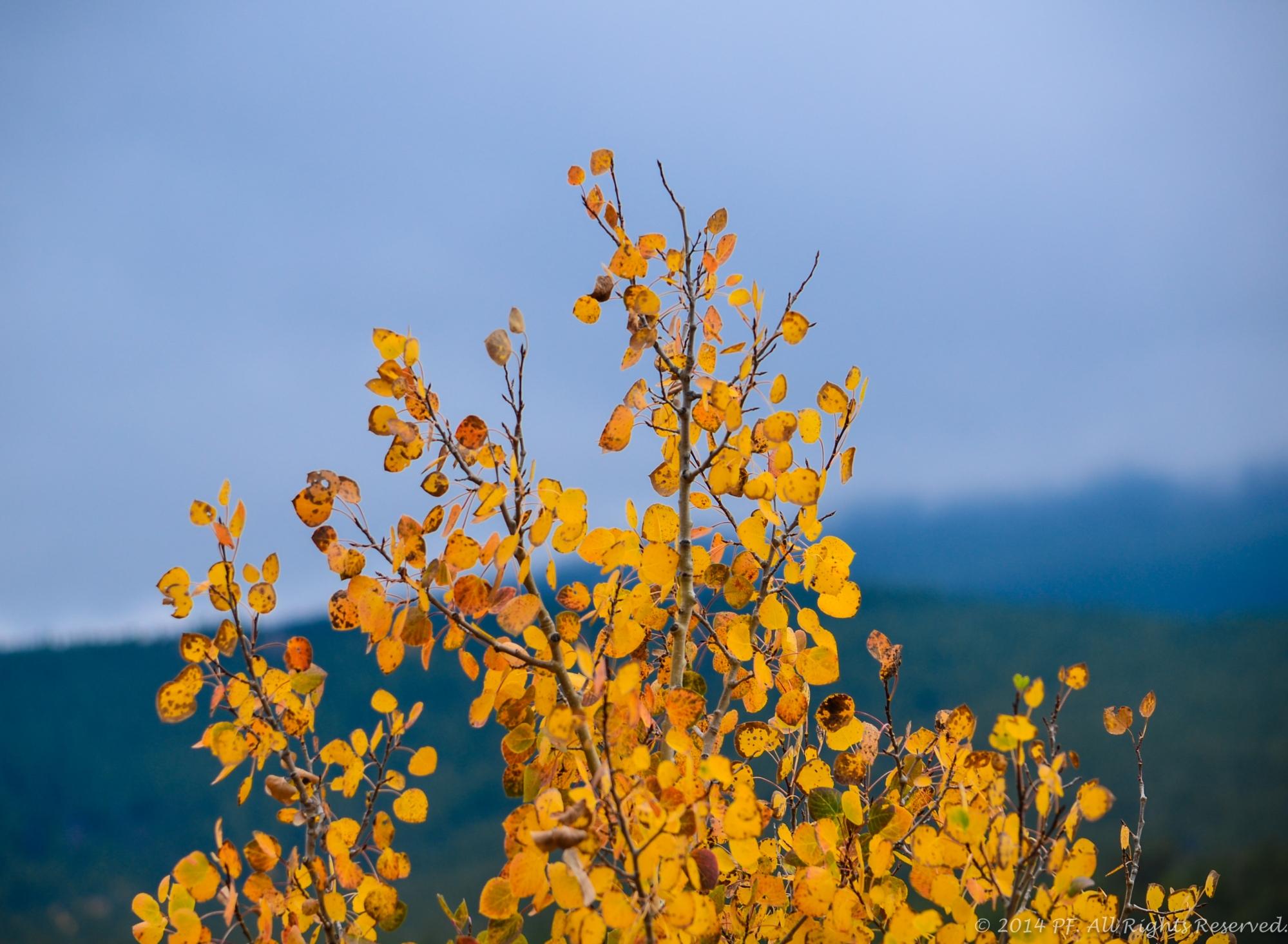 Leaf peeping in Colorado