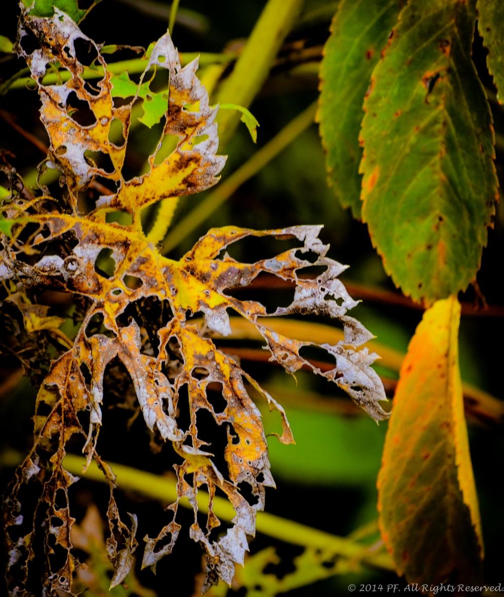 Brittle Beauty