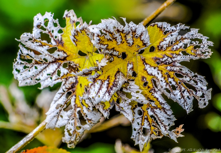 Autumn Magnificence